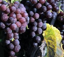 Sos ziołowo-winogronowy