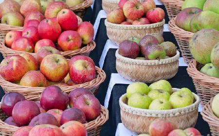 Jak zrobić domowe wino z jabłek? [przepis]